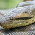 ヘビの種類を日本別、世界別に紹介!最大や最強はどいつだ!?