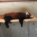 京都市動物園の見どころを紹介!トラやキリンが目の前に!?
