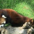 天王寺動物園のおすすめ動物を紹介!コアラやふれあいだけじゃない!?