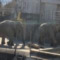 多摩動物公園の見どころやおすすめ動物!コアラや昆虫館が熱い!