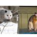 ポッサムとオポッサムはどんな動物?違いは!?日本でもペットにできる?